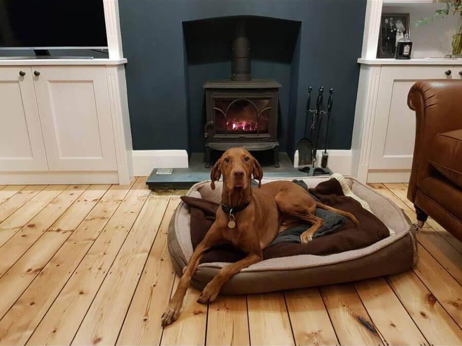 dog in basket on polished floor